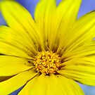 Itsy Bitsy Yellow Flower - iPhone5 Cover by Bryan Freeman