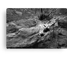 Nature's Sculpture Canvas Print