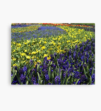 Yellow & Blue spectacle at Floriade, Canberra Canvas Print