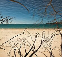 Whitehaven Beach by NicoleCurtis