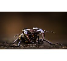Stag beetle Photographic Print