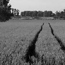 Tracks in the field by nyferates