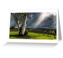 Light on the Vines Greeting Card