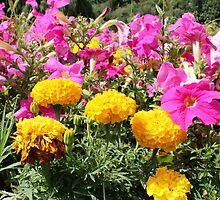 Bright Flowers at a sunny day by bohed