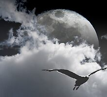 Seagull and the Moon by David Denny