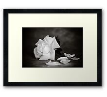 White Rose in Mono Framed Print