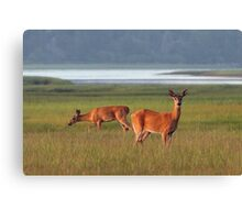 Deer in Overton Meadow Canvas Print