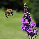 """ Bumble Airways to Tower. On final approach. Landing about 2 seconds "" by Poverty"