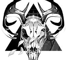 Deer Skull by MGrecke