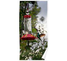 Hummingbird Perfect Landing Poster