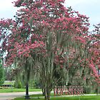 A Moss Covered Crepe Myrtle by Sharon Elliott-Thomas
