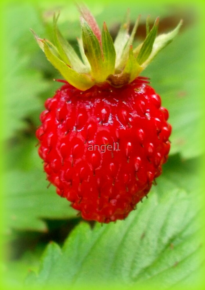 Wild strawberry by ©The Creative  Minds