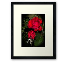Rose in the night Framed Print