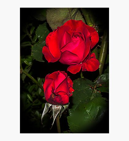 Rose in the night Photographic Print