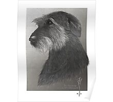 Artemis - Irish Wolfhound Poster