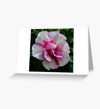 Unique Petunia Greeting Card