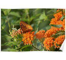 Wild Flower Feeding 7846 Poster