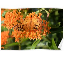Orange Butterfly 7849 Poster