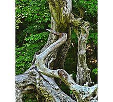 Heron Driftwood Photographic Print
