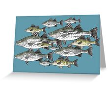 White and Yellow Bass School Greeting Card