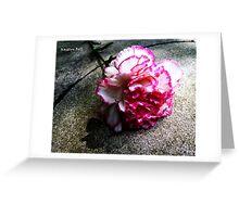 Pink Carnation No. 1# Greeting Card