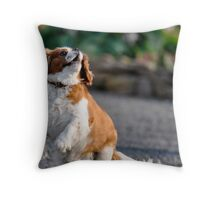 Alfie 11 I will catch it here it comes Throw Pillow