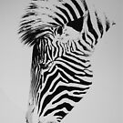 Zebra Portrait by Paul Fearn