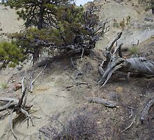Twisted Dead Wood by MsSexyBetsy