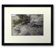 Twisted Dead Wood Framed Print