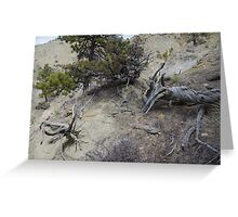 Twisted Dead Wood Greeting Card