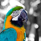 Friendly Parrot  by Inga McCullough