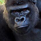 Gorilla Love by Inga McCullough
