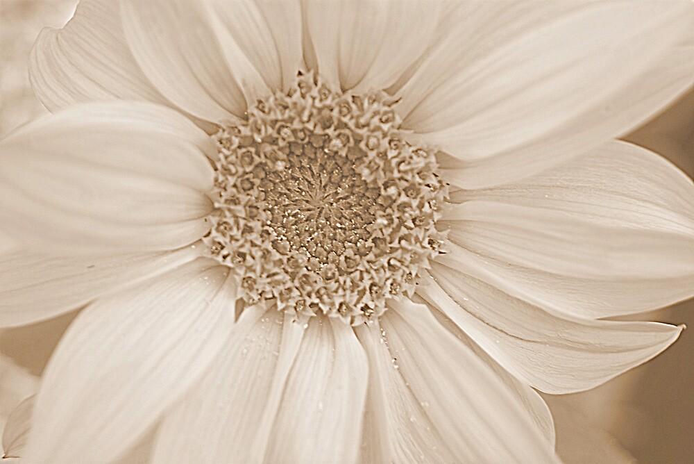 Sunflower by Lou Wilson