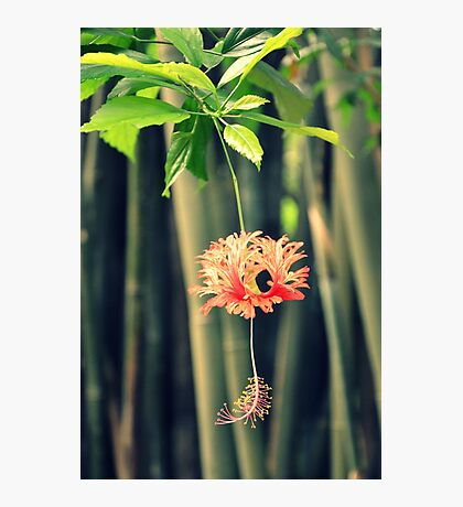 Jungle Beauty Photographic Print