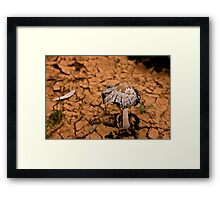 A shroom for Manon Framed Print