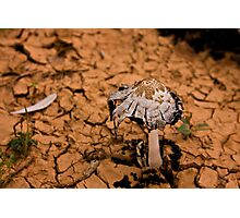 A shroom for Manon Photographic Print