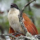 The Rain bird by jozi1