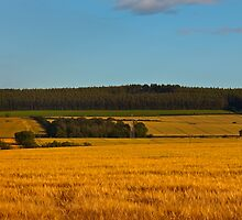 ELGIN - THE FIELDS ARE GOLD by JASPERIMAGE