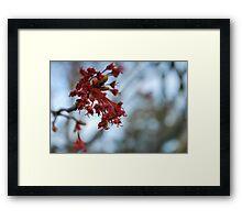 spring beginnings  Framed Print