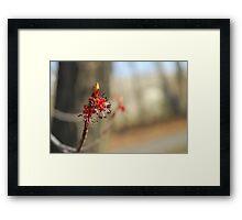 spring emerge Framed Print