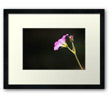 """""""Tenbosh Flower"""" Framed Print"""