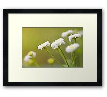 """White Flowers"" Framed Print"
