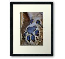 lion's paw Framed Print