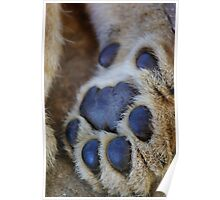 lion's paw Poster