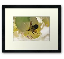 Bumble Bee in Gladiolos Heaven Framed Print