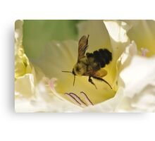 Bumble Bee in Gladiolos Heaven Canvas Print