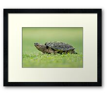 Hurry, Hurry Hard... Framed Print