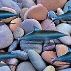 DOLPHINS ON THE PEBBLES by JASPERIMAGE