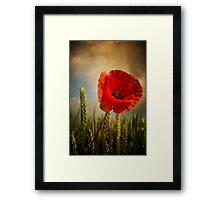 Poppy 2 Framed Print