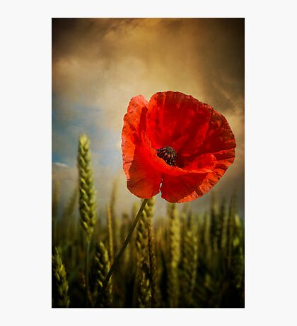 Poppy 2 Photographic Print